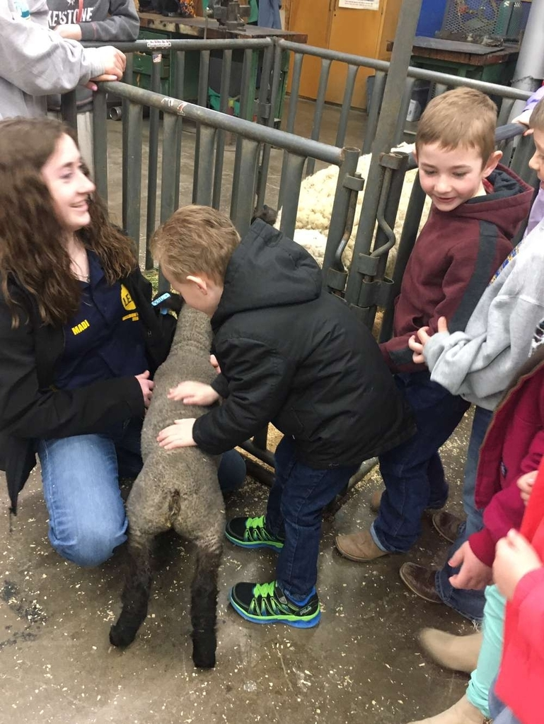 Elementary students touching lamb