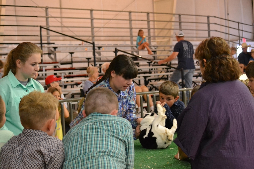 Student showing rabbit at county fair.